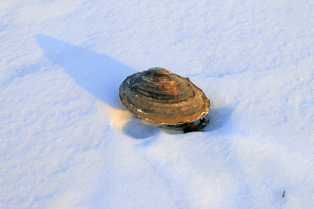 Shells in the snow