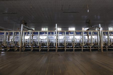 Milking parlor in dairy farm Publikacyjne