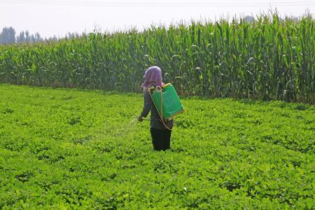 farmer in the spraying foliar fertilizer Stock Photo