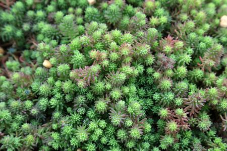 Fleshy pulp plants in the botanical garden   Imagens