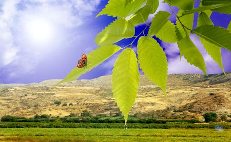 The ladybird sitting on green sheet against the beautiful nature      photo