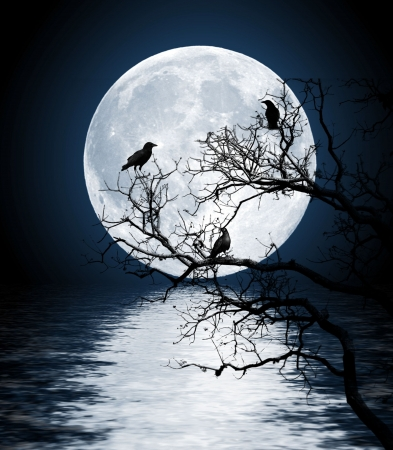 shined: Ravens sitting on a tree shined with the full moon