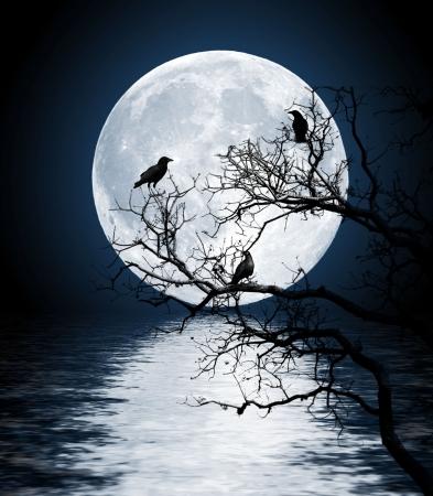 Ravens zittend op een boom scheen met de volle maan