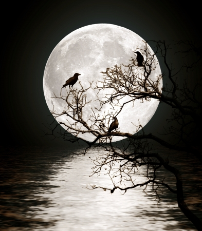 Ravens sitting on a tree shined with the full moon