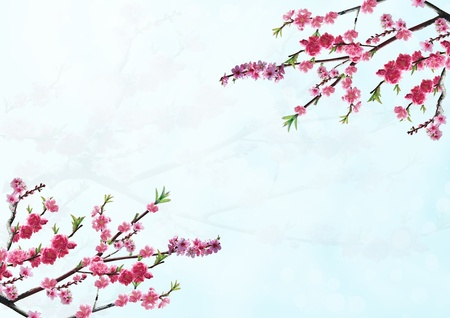 cherry branch with pink flowers photo