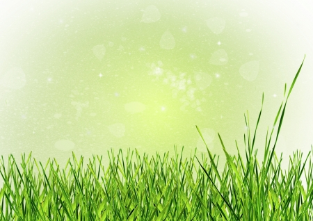 green grass as a background photo