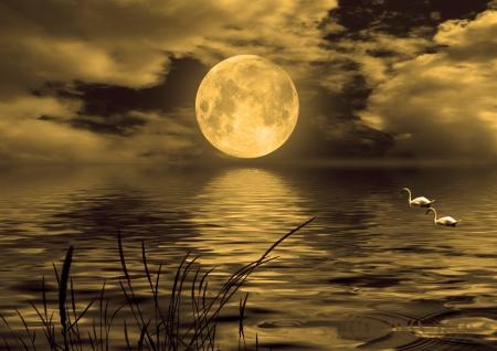 cisnes: cisnes flotando en el lago en la noche Foto de archivo