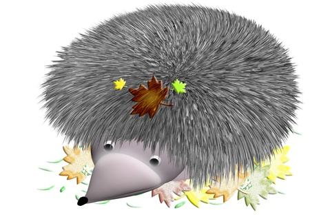 prickly hedgehog in autumn leaves photo