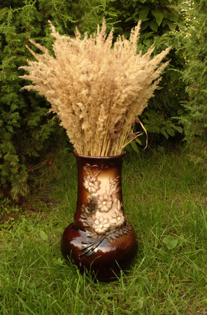 ferm: a brunch of dry grass in a vase