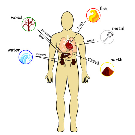 five elements: Five elements and human organs