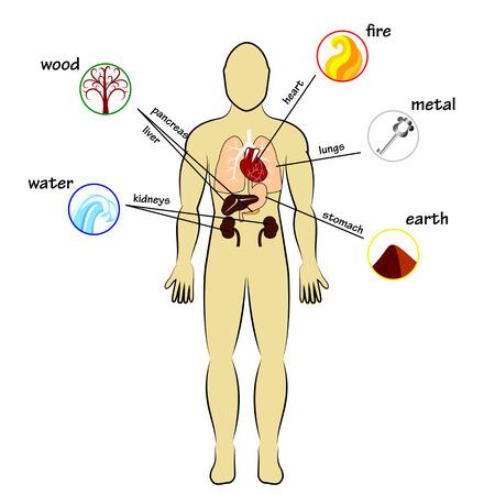 Pět prvků a lidské orgány Ilustrace