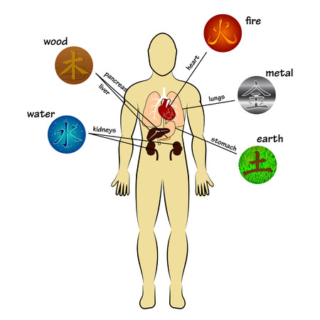 Five elements and human organs Vector