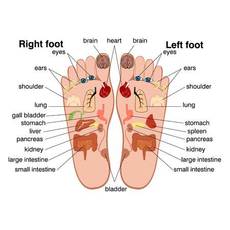 Reflexologie zones van de voeten
