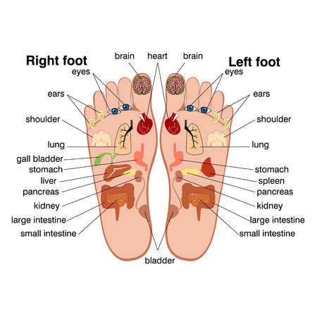 Reflexology zones of the feet