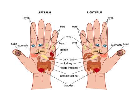 Gráfico de reflexología de la mano Foto de archivo - 59670984