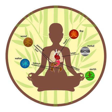 Cinq éléments et d'organes humains
