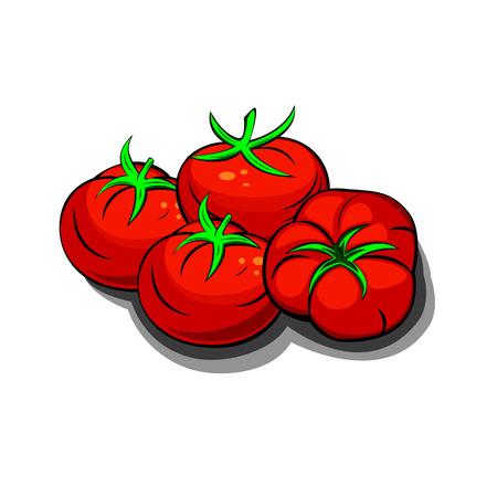 vermilion: Red fresh tomatoes vector illustration Illustration