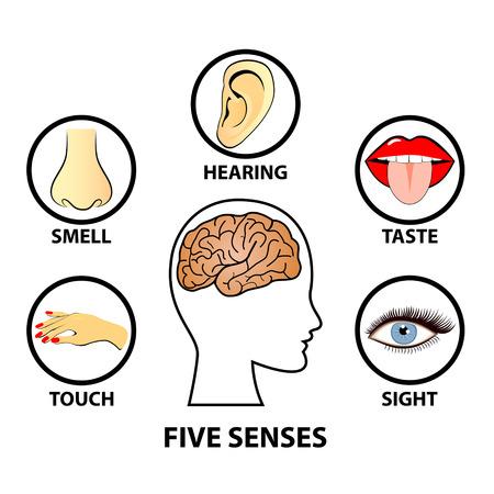 hand touch: Human five senses, education concept vector illustration
