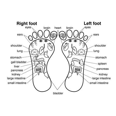 Reflexologie zones van de voeten vector illustratie,