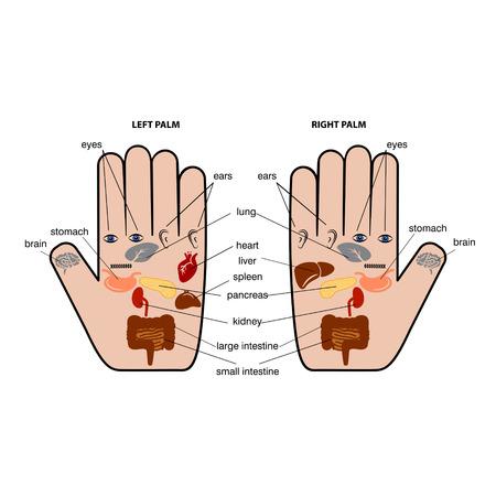Hand reflexology chart vector illustration. Ilustracja