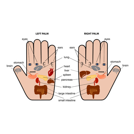 Hand reflexology chart vector illustration. Illustration