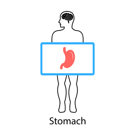 Stomach on screen. Vector illustration. Illustration