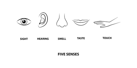 Human five senses, education concept vector illustration