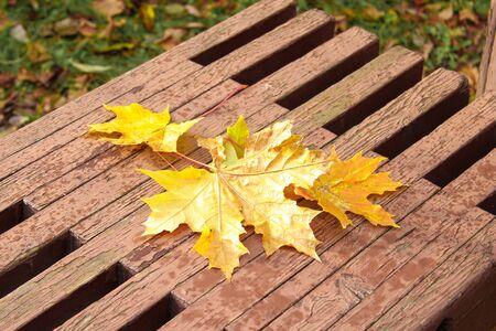 Autumn leaves on a bench. Colorful season. Фото со стока