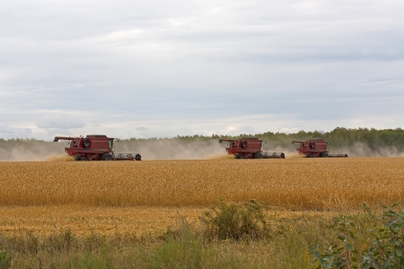 harvesters: Red Harvesters  for harvesting wheat on  background field and sky, Russia  Stock Photo