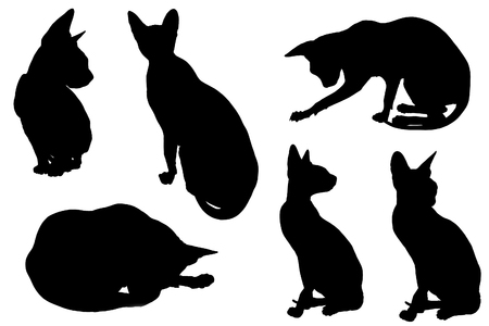 shadow silhouette: Cat silhouette with shadow, isolated on white background.