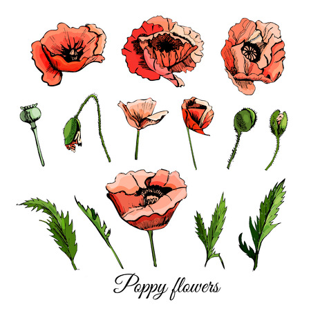 Set hand drawn colored  sketch with poppy flowers isolated on white  background.. Vector illustration. Иллюстрация