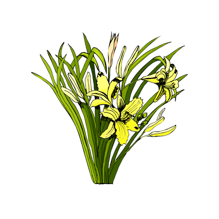 Bouquet with summer yellow flowers and leaves. Hand drawn and colored sketch.Vector illustration. Фото со стока - 99450780