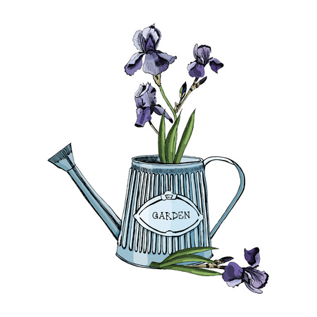A bouquet with iris violet flowers in a watering-can. Hand drawn graphic and colored sketch. Vector illustration. Иллюстрация