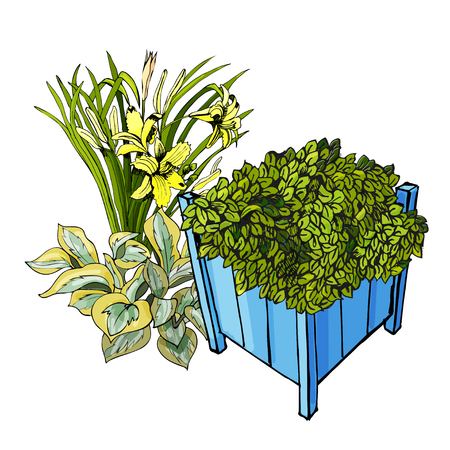Blue garden pots with ajuga near with hemerocallis fnd hosta flowers. Hand drawn and colored sketch isolated on white background. Vector illustration.