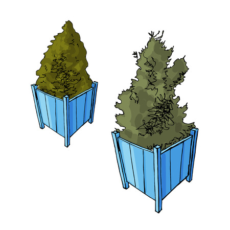 Two blue garden pots with thuja trees. Sketch. Vector illustration. Hand drawn. Иллюстрация