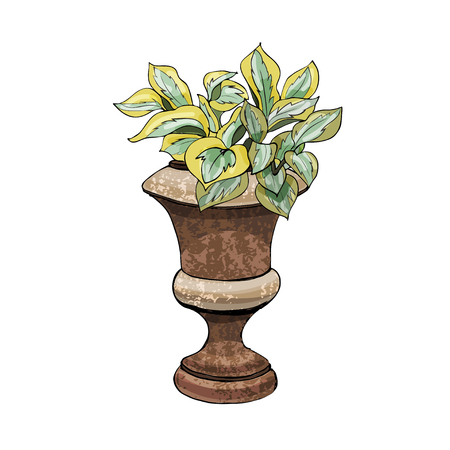 Retro rusty garden vase with hosta and flower. Hand drawn and colored sketch isolated on white background. Vector illustration Иллюстрация