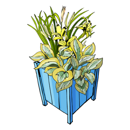 Blue garden pots with hosta and hemerocallis flowers. Hand drawn and colored sketch isolated on white background. Vector illustration.