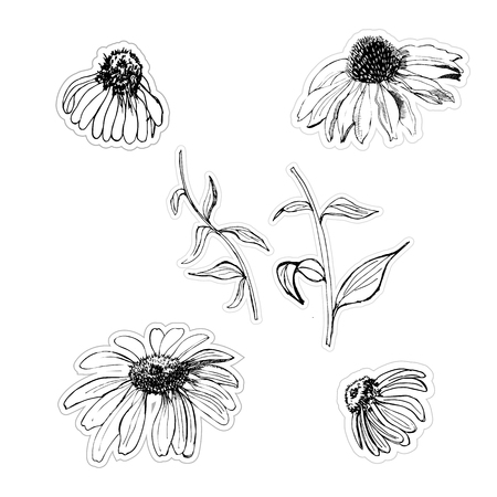 Graphic stickers hand drawn sketch with echinacea flowers isolated on white background. Vector illustration.