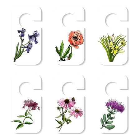 Tags with hand drawn grapihic and colored sketch with summer flowers sedum, papaver, echinacea, hemerocallis, iris, eupatorium for flower garden. Vector illustration. Иллюстрация