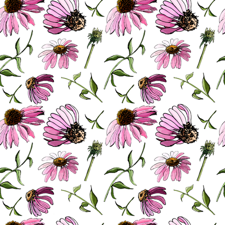 Floral seamless pattern with hand drawn graphic and colored sketch with echinacea flowers on white background. Vector illustration. Иллюстрация