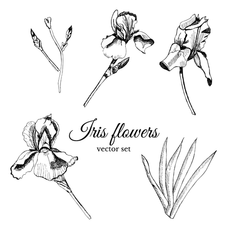Set with hand drawn graphic  sketch with summer flowers iris with leaves and bud. Vector illustration