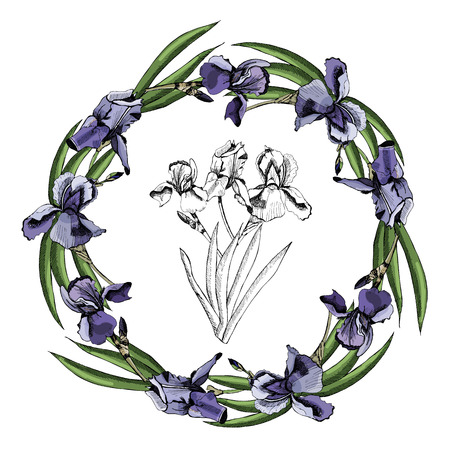 Hand drawn colored  sketch with wreath of iris flowers and  graphic bouquet isolated on white  background.Vector illustration.
