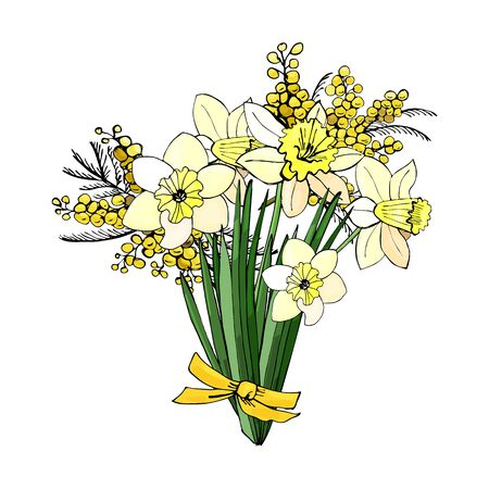 Bouquet of yellow narcissus and mimosa. Hand drawn colored  sketch with flowers and  leaves isolated on white background. Vector illustration.