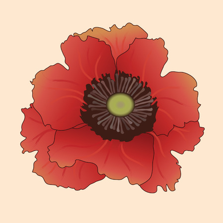 bright: Bright poppy.