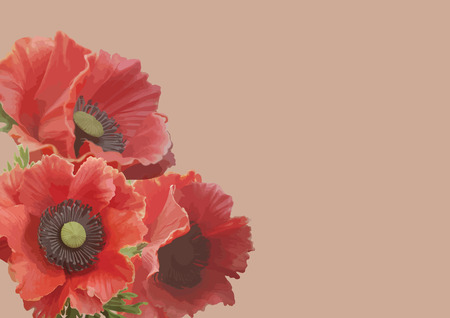 bright: Three bright red poppies. Illustration