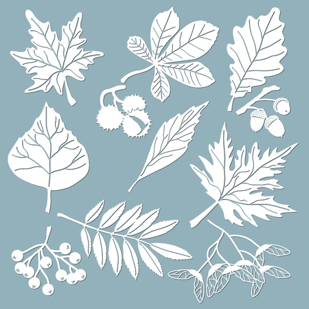 Set template for laser cutting and Plotter. Oak, maple, Rowan, chestnut, berries, acorn, seeds, birch, ash. Leaves for decoration. Vector illustration Sticker set Plotter and screen printing Illustration