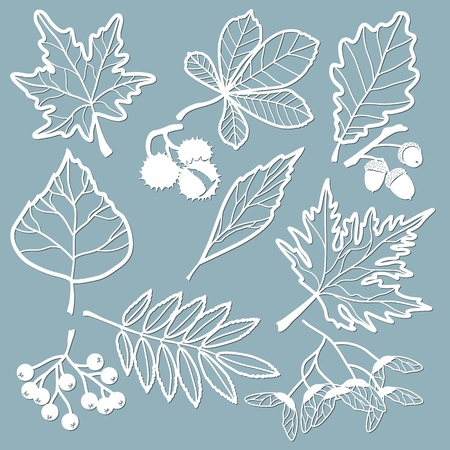 Set template for laser cutting and Plotter. Oak, maple, Rowan, chestnut, berries, acorn, seeds, birch, ash. Leaves for decoration. Vector illustration Sticker set Plotter and screen printing
