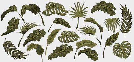 Set. Tropical palm leaves, jungle leaves vector floral pattern background.. 일러스트