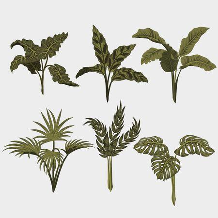 Set. Tropical palm leaves, jungle leaves vector floral pattern background.. Illustration