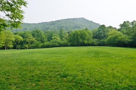 natuurlijke landschap van groene gazon Stockfoto